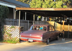 65 Valiant with Chihuahua