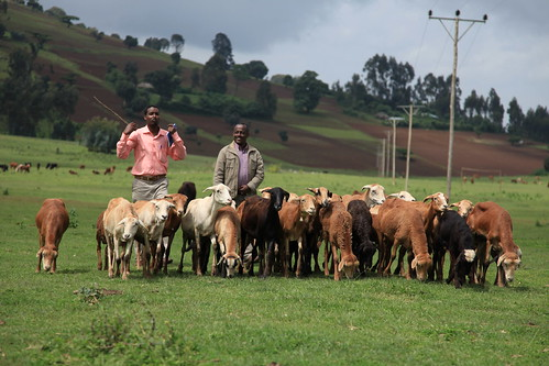 bill melinda gates lmp Ethiopia livestock master plan – key findings i o  (lmp) in ethiopia the lmp  the lmp project development process was funded by the bill & melinda gates.