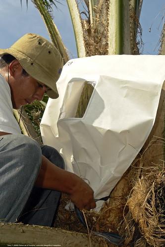 Confirman que biodiésel de palma colombiano es sostenible y reduce en más de 83% emisiones de gases efecto invernadero