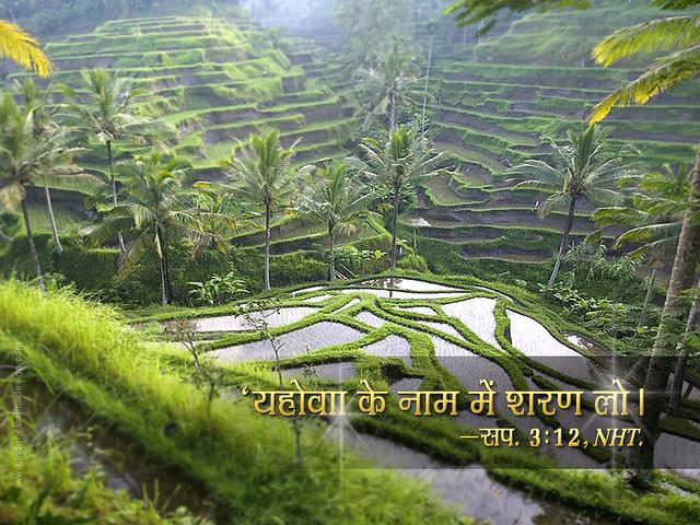 2011yeartext bali ubud rice terrace hindi ubud has some for Terrace ubud bali