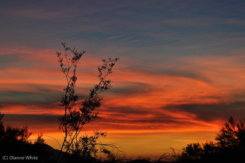 sunset arizona tucson sonorandesert