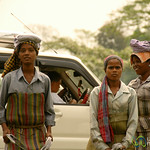 Young Tea Pickers - West Bengal, India