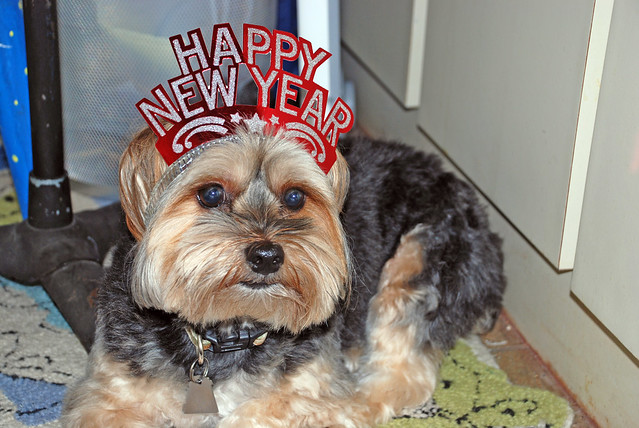 doggie happy new year