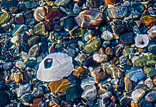 shells water stones alki westseattle beachstones seawater