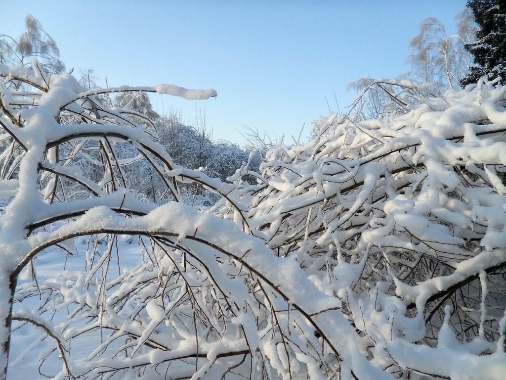 красота зимы011 003