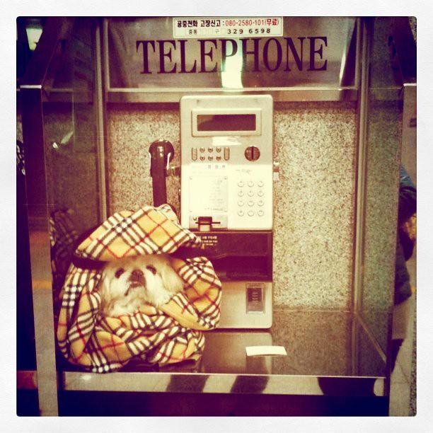payphone伴奏吉他谱
