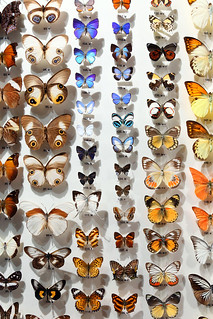 Hall of Butterflies