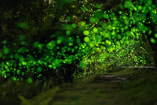 Firefly Galaxy -IMG_9873fu