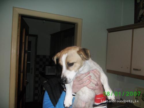 Wed, Nov 24th, 2010 Found Male Dog - Newbridge - Mountbellew, Ballinasloe, Galway