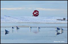 Seagulls Talk