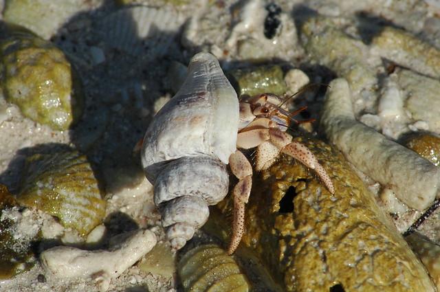 Florida News Crab Cakes