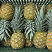 Fresh pineapples at Bomart Farms