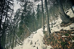Trail above lake Bled, leading to Bled Castle