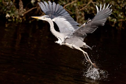 Dodder flight