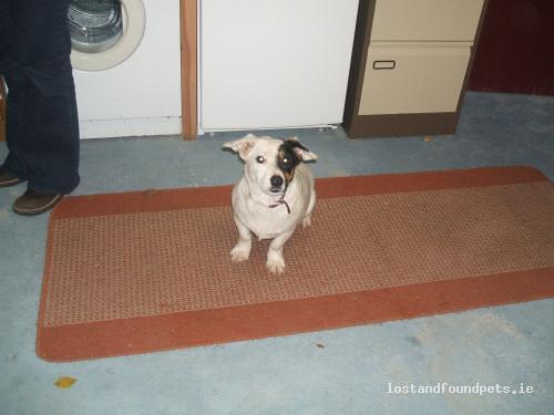 Sun, Oct 24th, 2010 Found Male Dog - Portlaoise, Ballyroan, Laois