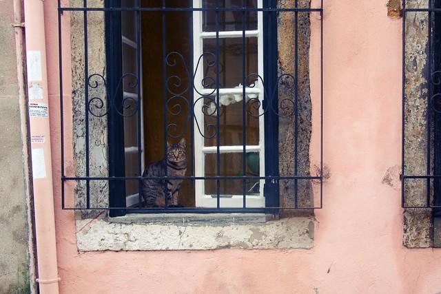 Lisbon kitty