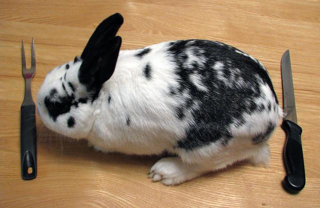 Rabbit Video Sharing
