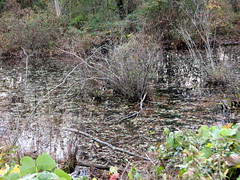 Walnut Creek Lake Raleigh NC 0487