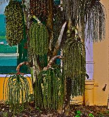 Natural Xmas decorations.........