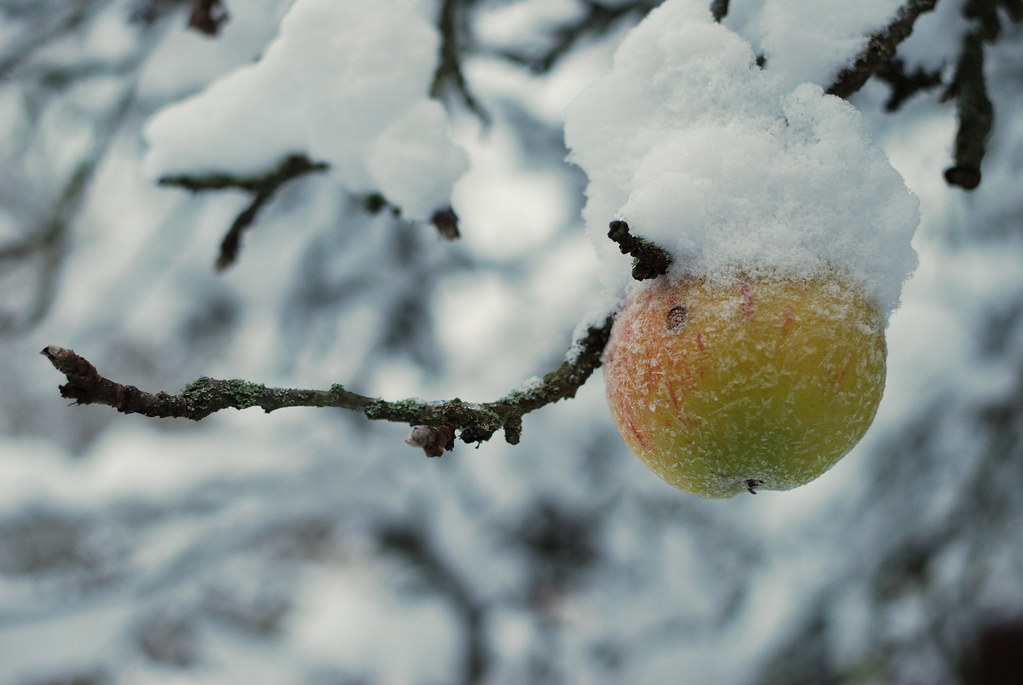 Winter apple DSC_0001