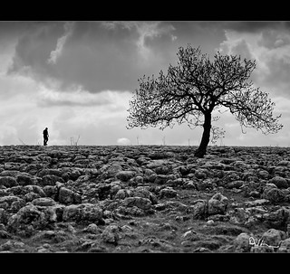 Man and Tree - Limestone Pavements Yorkshire Dales