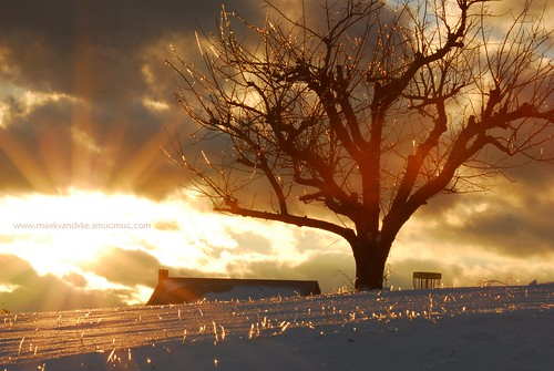 sunset tree ice golden farm southcarolina blueridgemountains oconeecounty upstatesouthcarolina chattoogabellefarm