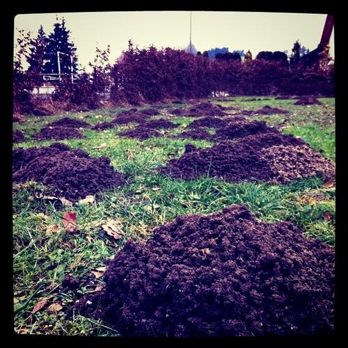 Molehill mine field