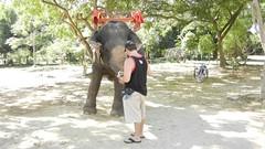 Feeding Bananas to a Thai Elephant in Pattaya, Thailand
