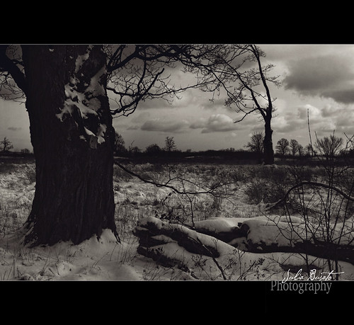 Gloomy Snow by Julia Busato Photography