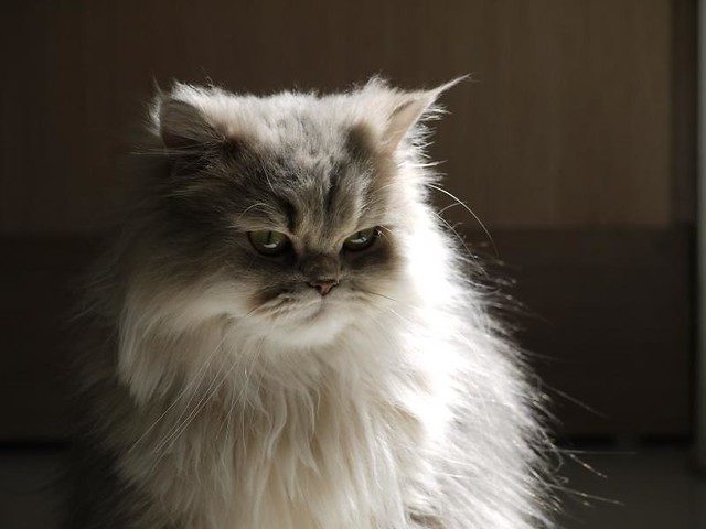 caturday, angry kitty