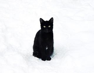 (20/365) Black cat