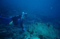 Gary Yeo, Diving, Fiji
