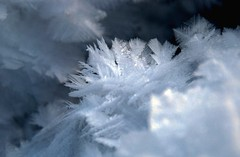 winter feathers