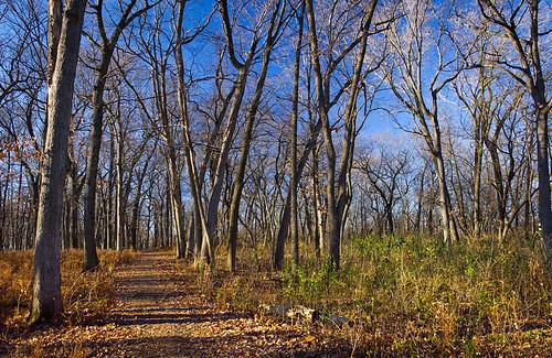outdoors woods december view hill capital madison mendota conservancy danecounty southernwisconsin crispair cityofmadison northportdrive danecountyhumanservices lakeviewwoods