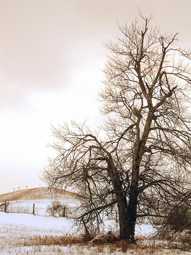 winter snow tree northcarolina blueridgeparkway westernnorthcarolina southernappalachians ccbyncsa canonpowershotsx10is danielboonestrace