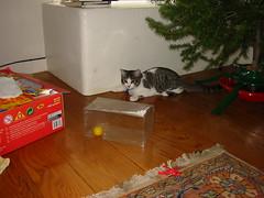 Moonlight kitten with improvised toy