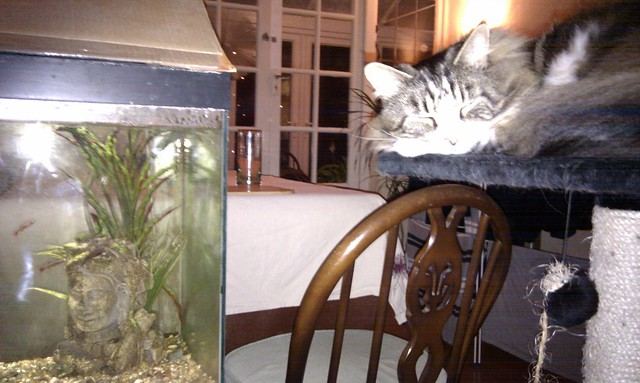 Kitty's Sleeping With The Fishes