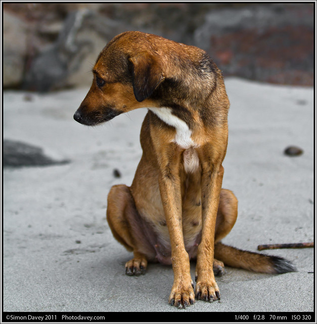 Sad stray dog on the beach. | Flickr - Photo Sharing!