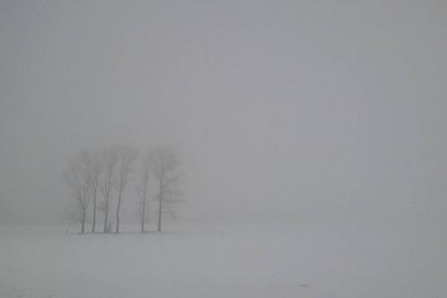 Diffuse winter