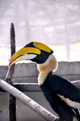toucan(0.0), flightless bird(0.0), animal(1.0), hornbill(1.0), yellow(1.0), wing(1.0), fauna(1.0), close-up(1.0), beak(1.0), bird(1.0),