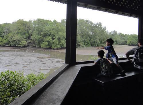 Kids enjoying shorebirds at Sungei Buloh