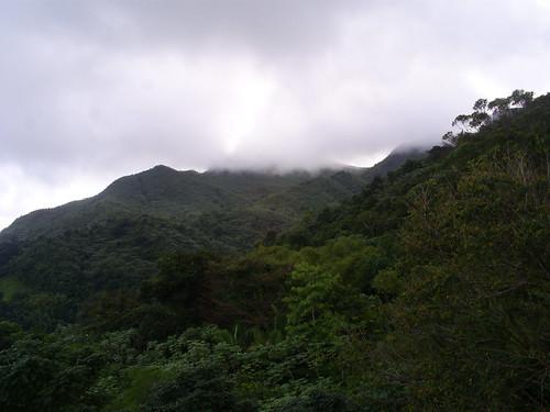 puertorico riogrande wyndham riomar elyunquerainforest travelbenefitsbydesign