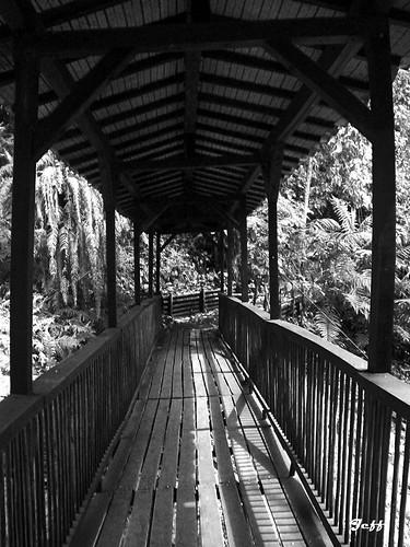 Imagen de Puente de madera en el Jardín Botánico del Quindio