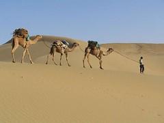 Liwa Safari Tour