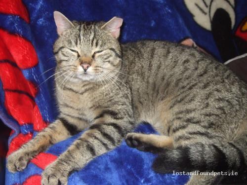 Sun, Dec 12th, 2010 Found Male Cat - Laccamore, Abbeydorney, Kerry
