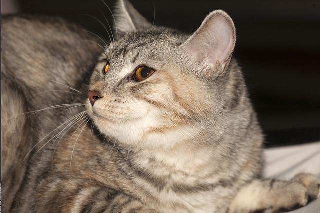 Royal Canin Cat Food Sterilized Kg