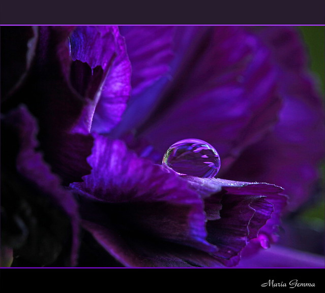 The Dance of the Color Purple ~~ Title by Luigi Mirto