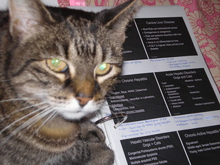 Gizmo helps me study the liver