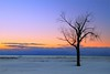 Lonely Tree by PhotoDocGVSU