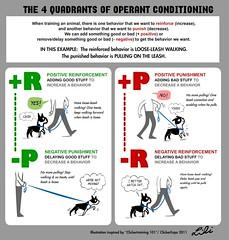 Secondary Reinforcer In Pavlov S Dog Experiment Psychology